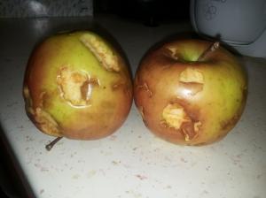 Kisti megrágott almái
